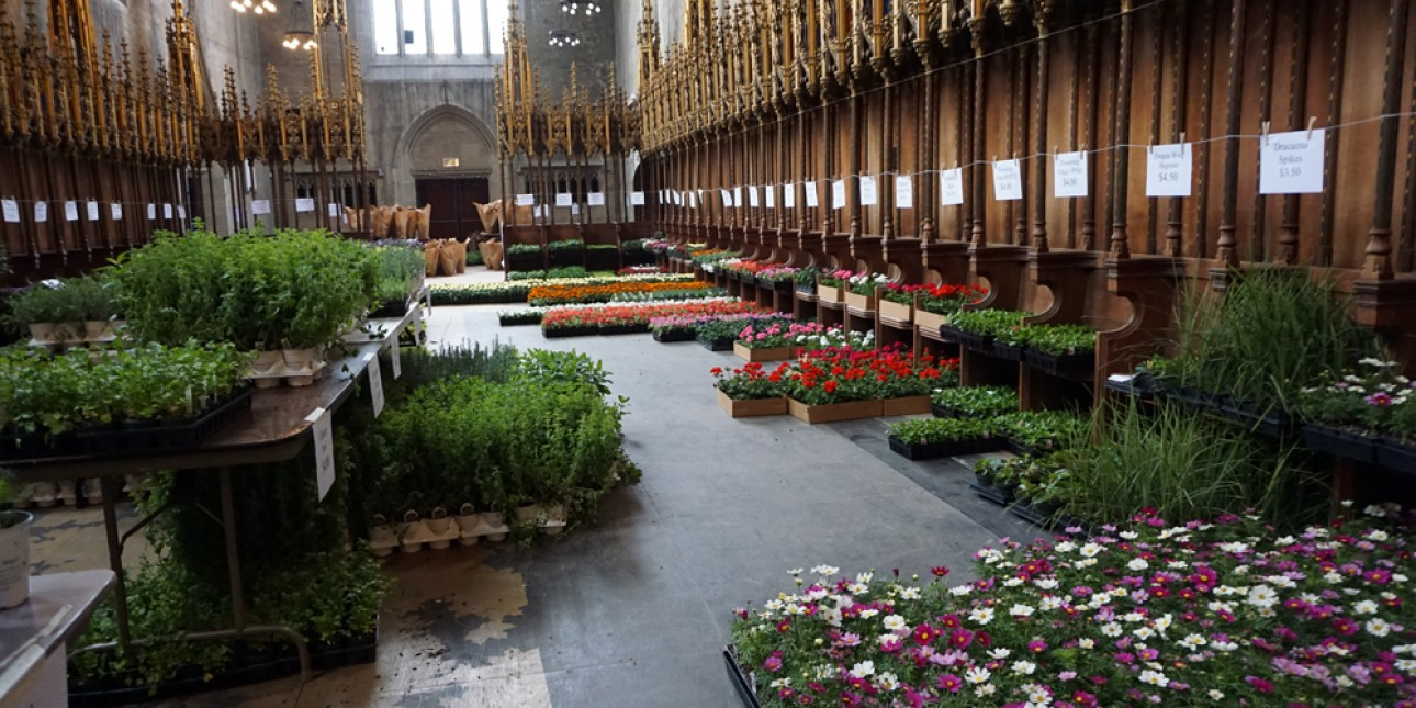 PIC Plant Sale 2016 at St. Andrews Chapel